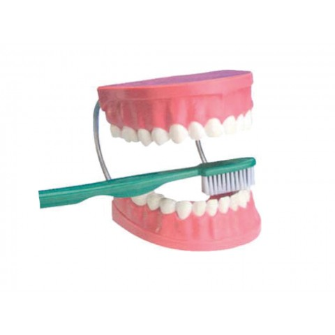 Diş Fırçalama