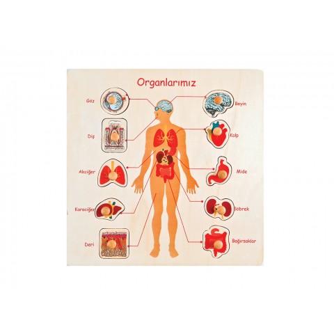 Organlarımız Puzzle Tutamaklı Ahşap